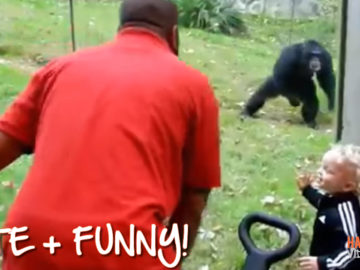Super funny monkeys share